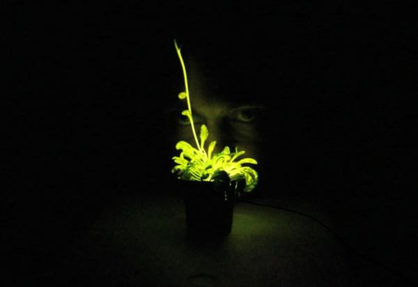 glowing WSJ digits - video shape